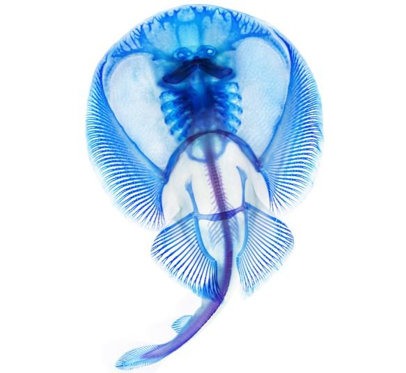 xray-fish-8_2796468k