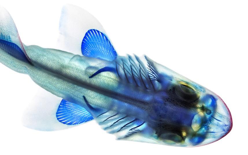 xray-fish-9_2796469k
