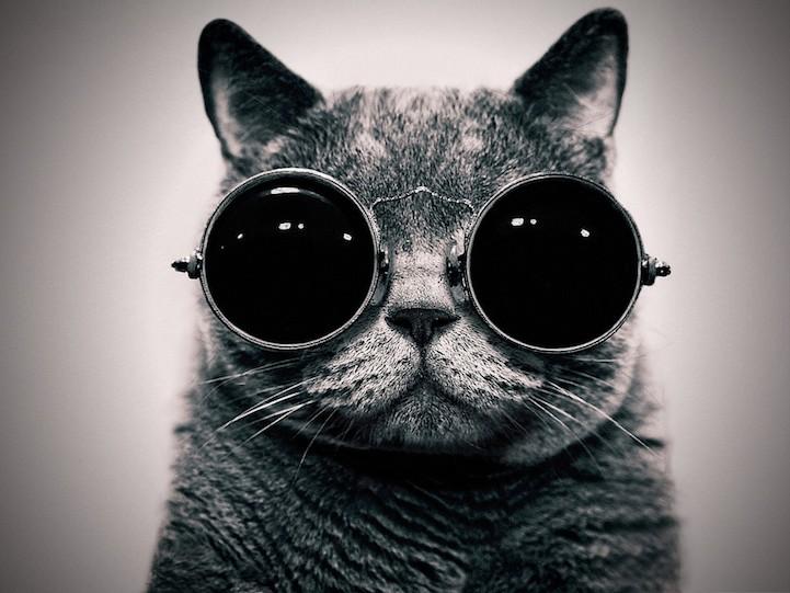 hipstercat1