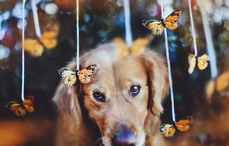 dog-photography-chuppy-golden-alternopolis-retriever-jessica-trinh-15
