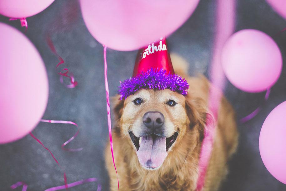 golden-retriever-chuppy-dog-photography-alternopolis-jessica-trinh-10