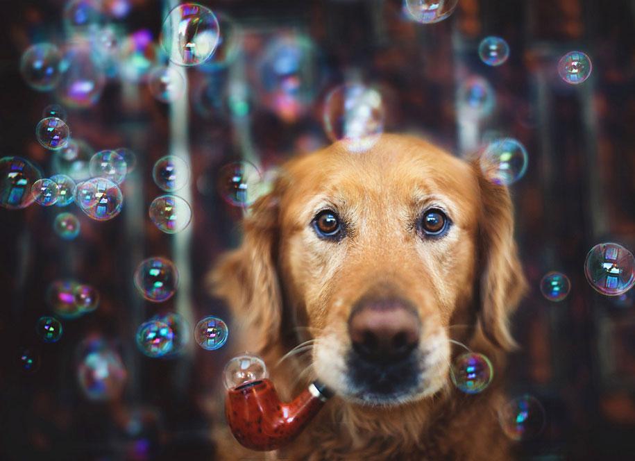golden-retriever-chuppy-dog-photography-alternopolis-jessica-trinh-11