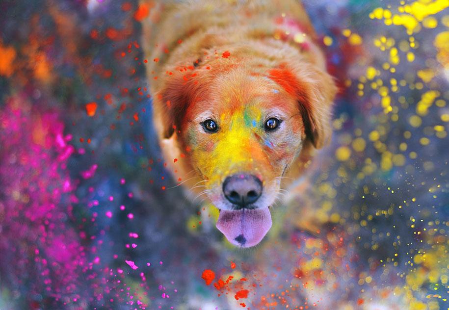 golden-retriever-chuppy-dog-photography-alternopolis-jessica-trinh-12