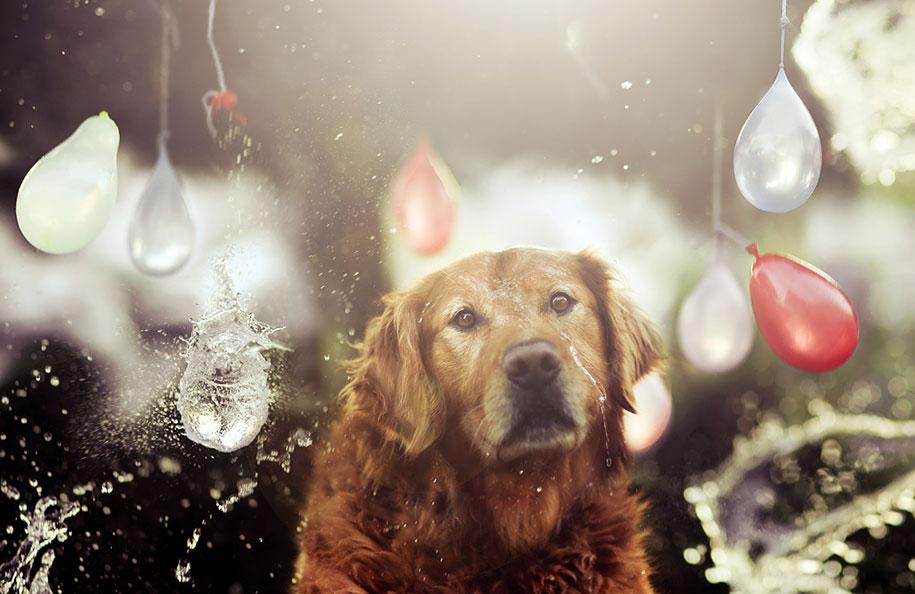 golden-retriever-chuppy-dog-photography-alternopolis-jessica-trinh-14
