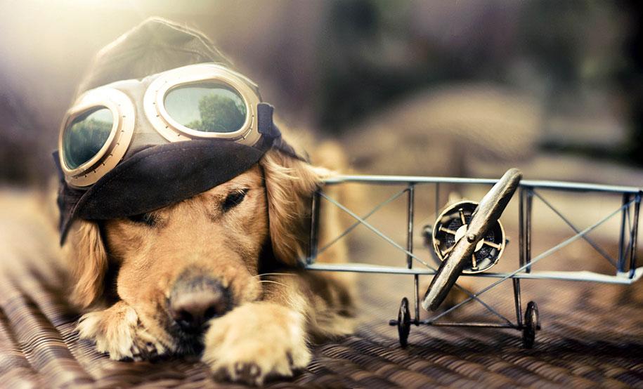 golden-retriever-chuppy-dog-photography-alternopolis-jessica-trinh-2