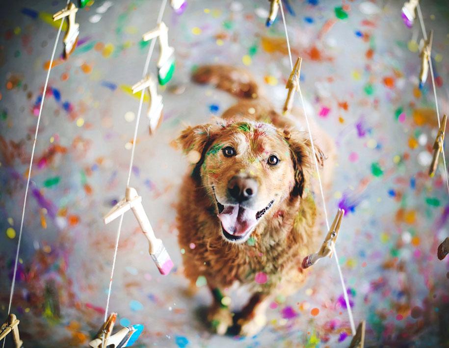 golden-retriever-chuppy-dog-photography-alternopolis-jessica-trinh-8