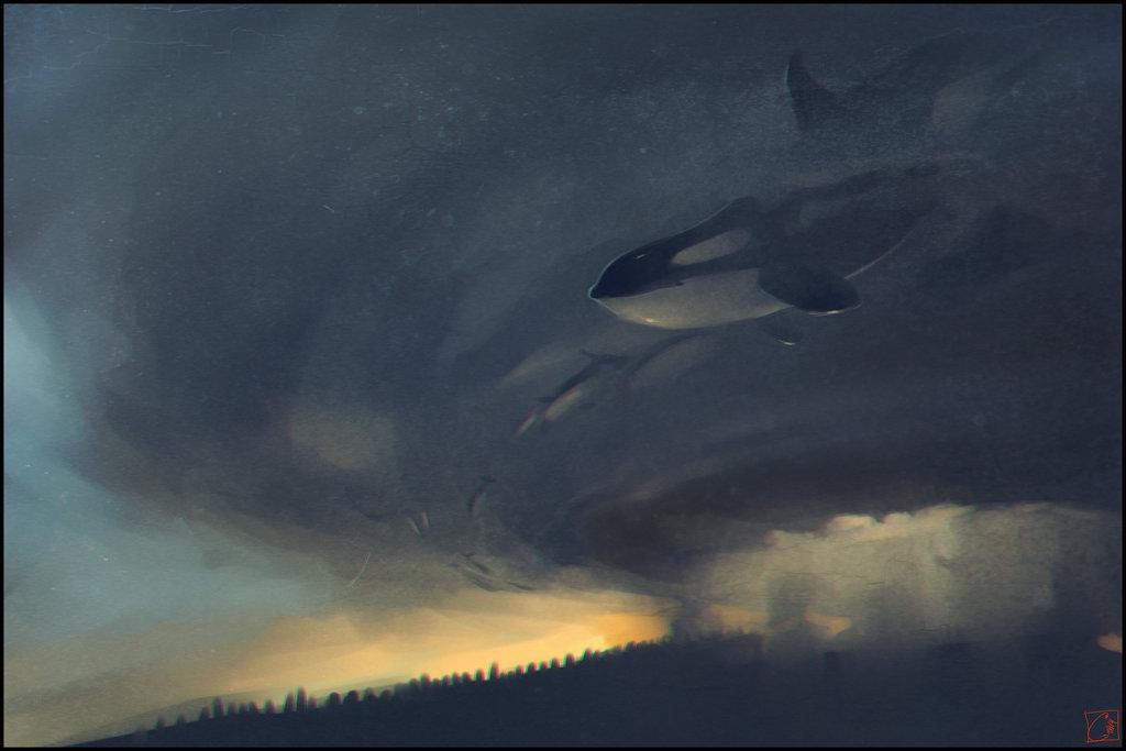 whales_killers_by_gaudibuendia-alternopolis