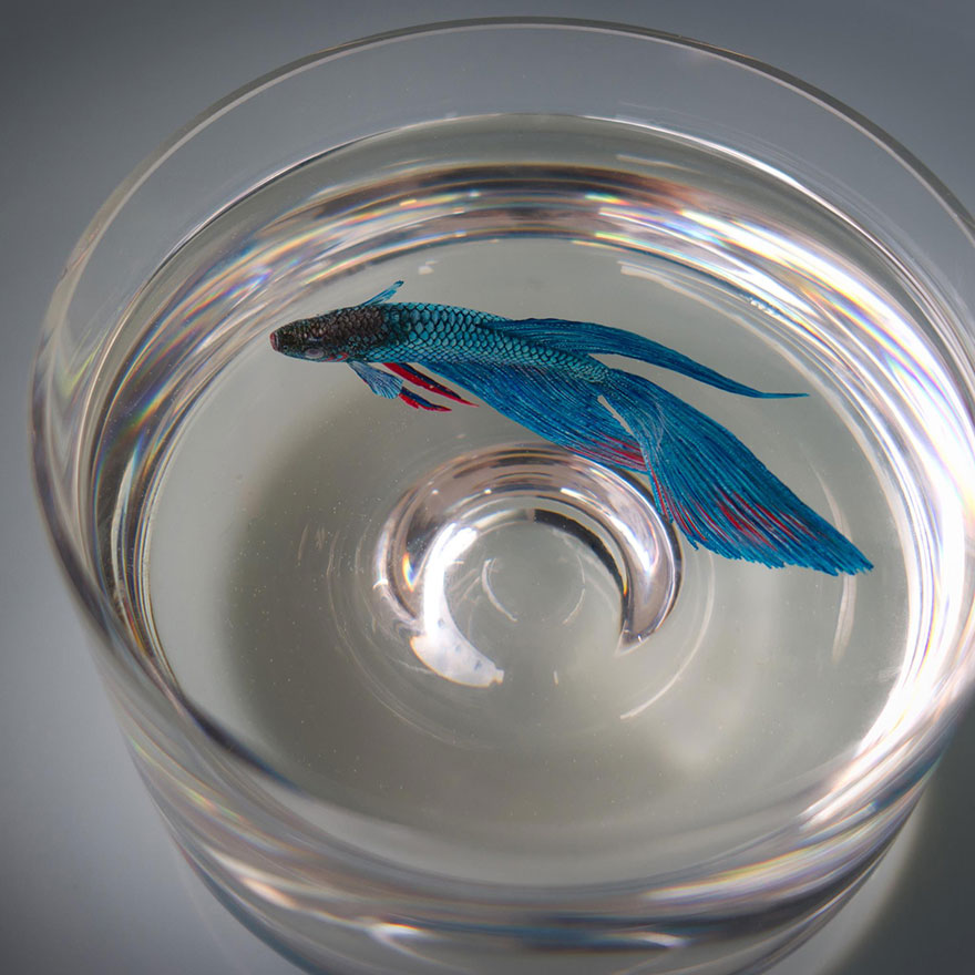 realistic-3d-sea-animals-resin-Keng-Lye alternopolis  (1)