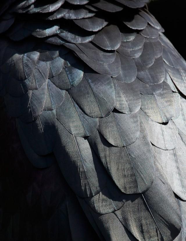 thomaslohr_Birds_16-640x828