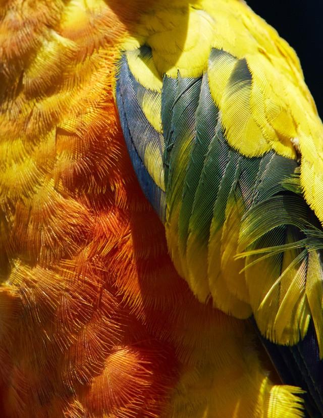 thomaslohr_Birds_2-640x828