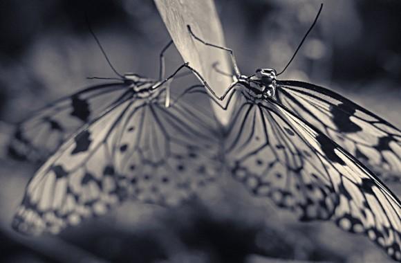 Antii-Viitala-Black-and-white-animals-3-580x380