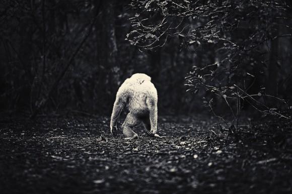 Antii-Viitala-Black-and-white-animals-580x386