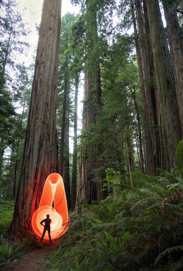 Roadtrip_Redwoods