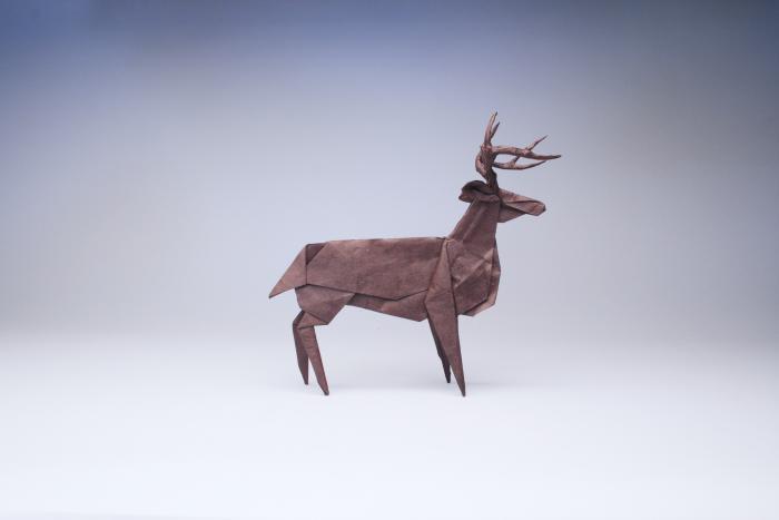 whitetail_deer_kozo