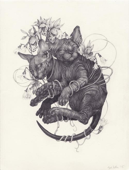 Zoe+Keller+Sphynx+Cats
