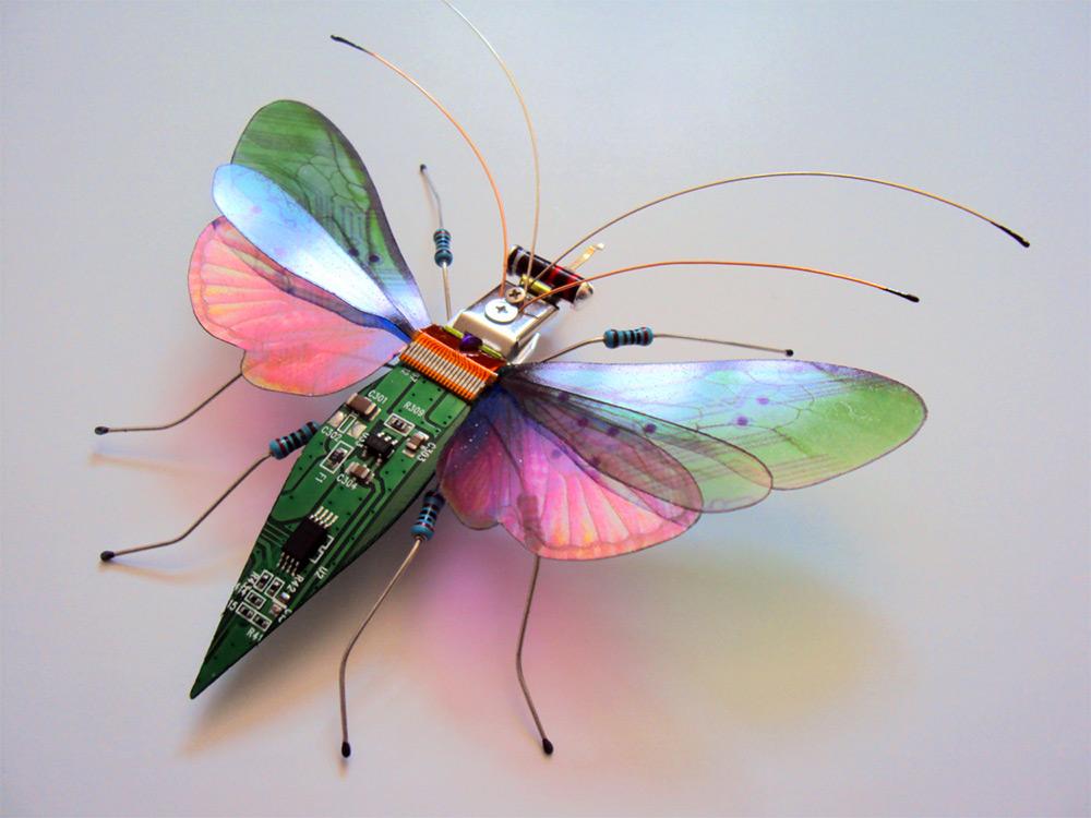 bug-3