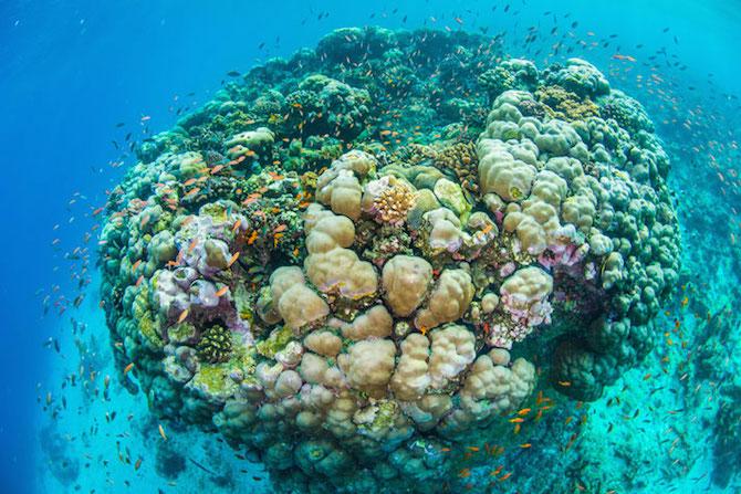 1-underwater-room-Manta-Resort-Pemba-Island-Tanzania-Architecture_